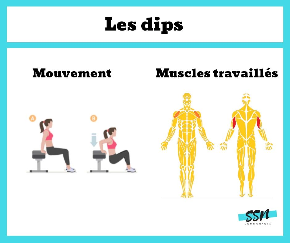 Exercice triceps dips en musculation