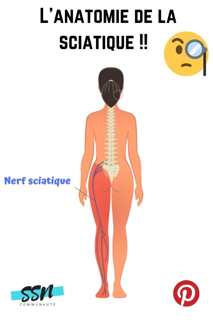 Anatomie de la sciatique